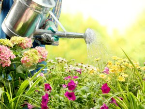 how-to-design-your-perfect-garden